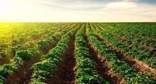 Cómo es la agricultura en España