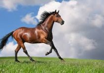 Cuáles son los animales que los españoles llevaron a América