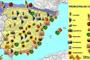 ¿Qué se cultiva en España?